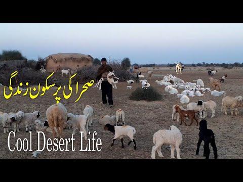 Primitive living in desert Mud houses in desert Lifestyle in Pakistan