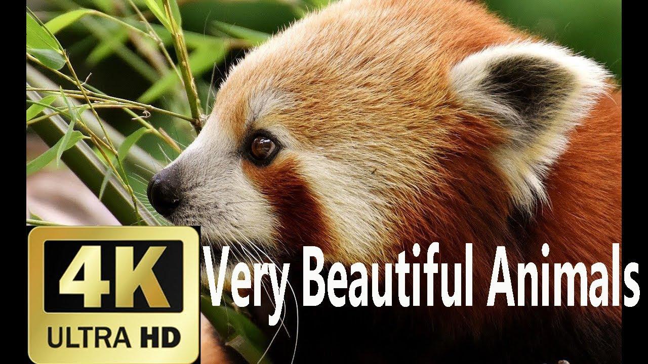 Very Beautiful Animals 4K Video